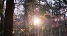 雪后初晴  太陽
