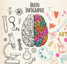 彩绘左右脑功能信息图矢量素材