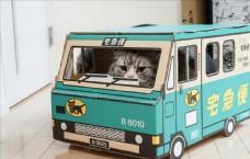 纸盒里的猫