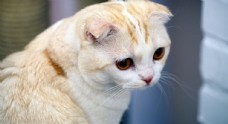 猫图片素材壁纸宠物动物图片素材