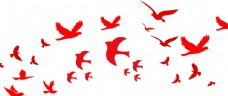 和平鸽集合