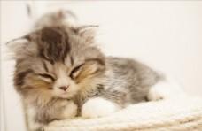 睡觉的猫咪