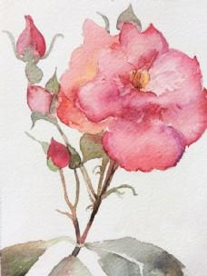 鲜花  插画