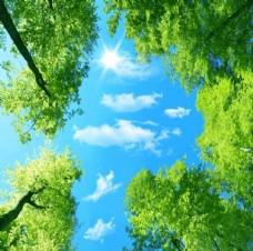 天顶蓝天大树