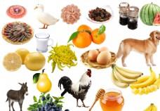 家禽蔬菜水果
