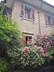 老洋房与蔷薇花