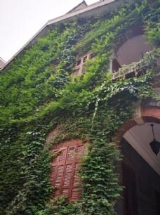 老洋房与爬墙虎
