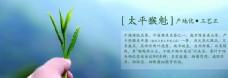 茶介绍 banner设计 茶品