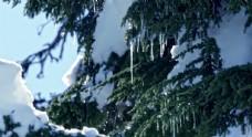 结冰的树叶