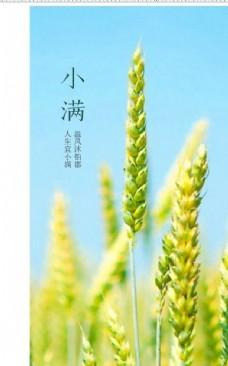 小满 节气 蓝天 麦穗 稻谷