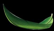 端午节竹子