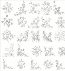 白描花卉植物素材线稿05