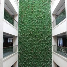 办公楼垂直绿化