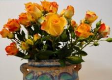 黄色野玫瑰