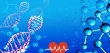 DNA基因
