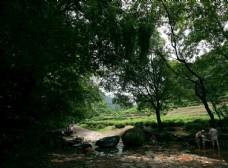 杭州九溪十八涧