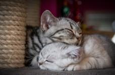 猫图片素材动物素材壁纸唯美壁纸
