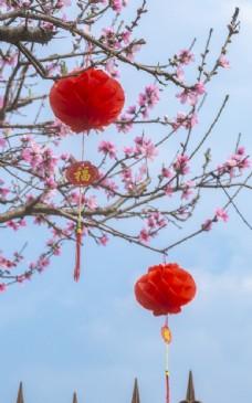 院子里桃花