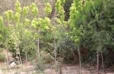 乡间小树林