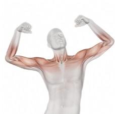 三维人体模型