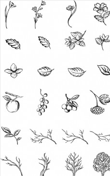 白描花卉线稿