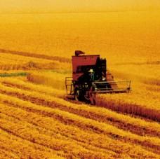 农业丰收  麦田高清