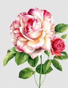 手绘玫瑰花素材 油墨 水墨