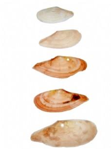 海螺 贝壳