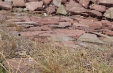 石头路和野草