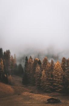 雾里的山林