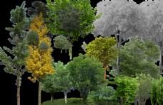 景观后期常用植物立面