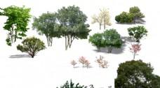 景观后期常用立面植物