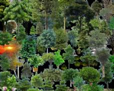 景观后期常用植物树种绿化