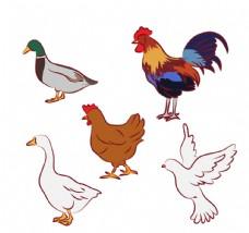 5款创意鸟类设计矢量素材