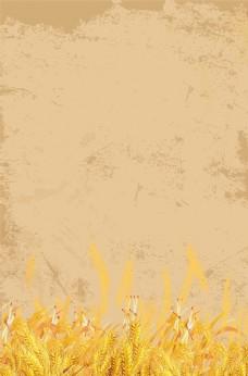 金色小麦背景