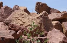 石块和植物