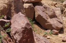 石头和植物