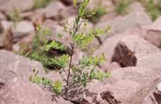 石块中的植物