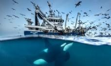 深海捕捞作业