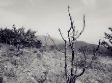 枯树   野外  山