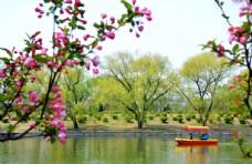 桃花美景图