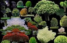 景观后期常用植物鸟瞰植物