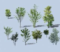 各种树植物素材