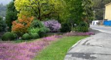 美丽乡村植物配置景观效果图