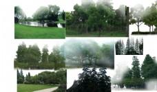景观后期常用植物背景树