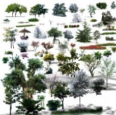 常用植物鸟瞰植物素材