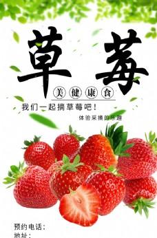采摘草莓海报