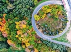 松树 秋色 枫叶 树林 森林