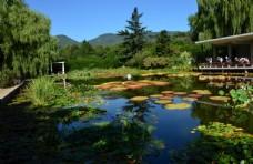 南植物园美景