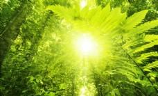 热带雨林绿色植物风景